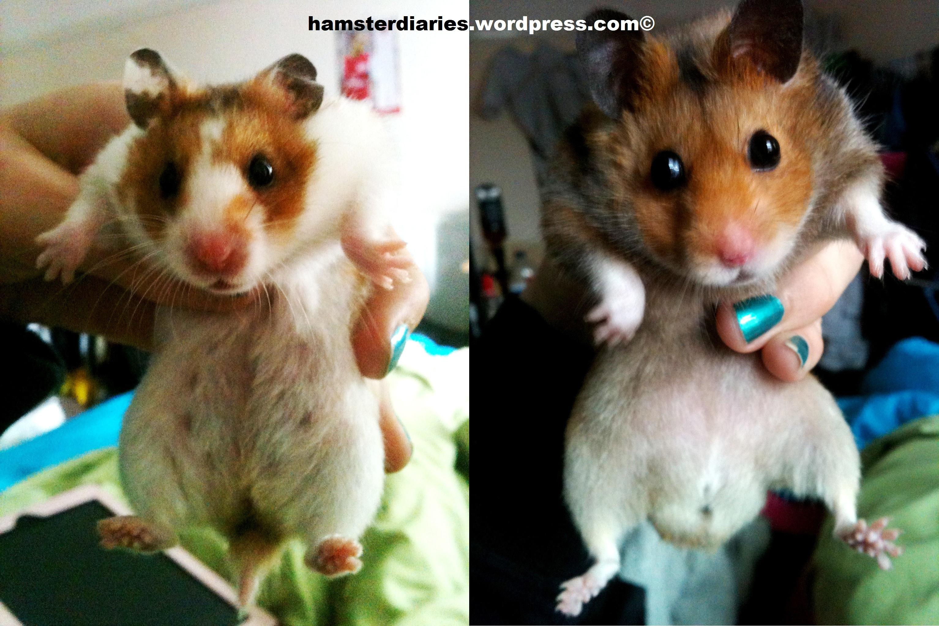 Hamster vet adult hentai girls
