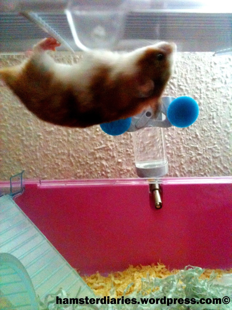 I think my hamsters unhappy.?