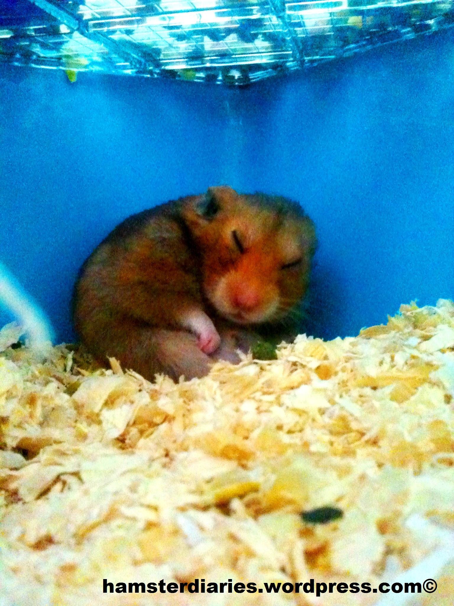 Hamster xxx дренеnaked варкрафт porn photos