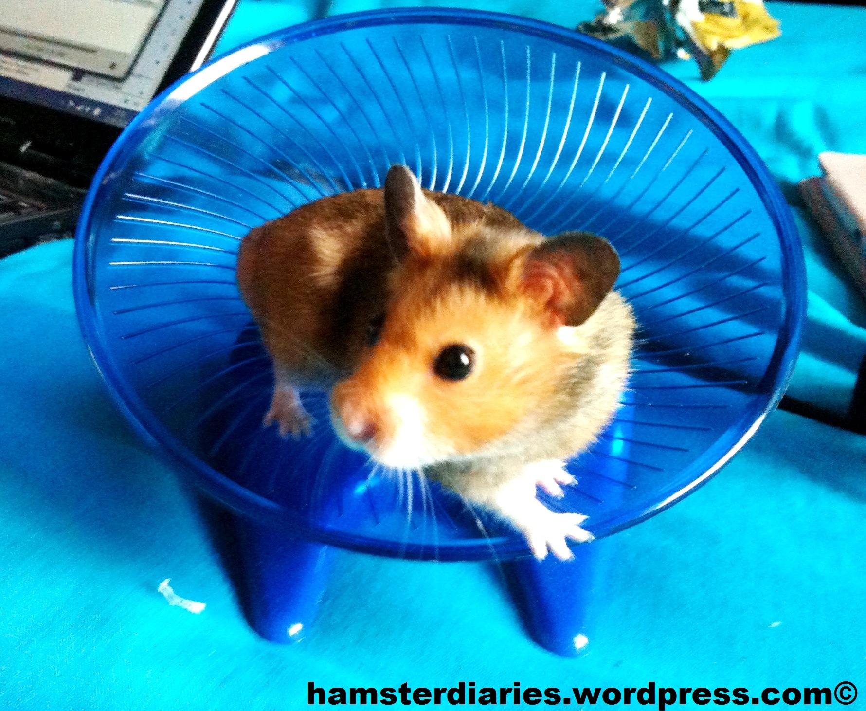 Hamster xxx дренеnaked варкрафт erotic pics