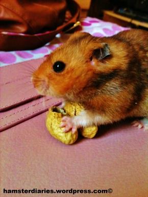 Did someone say peanuts?!