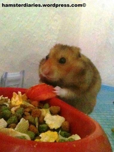 dexter eating a carrot