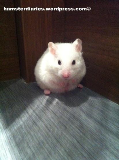 Casper the Hamster