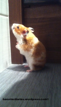 Eve the Hamster