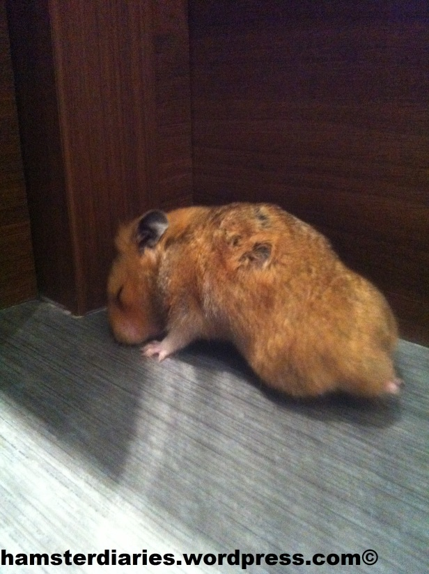 hip spots on hamsters