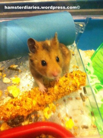 chew sticks for hamsters