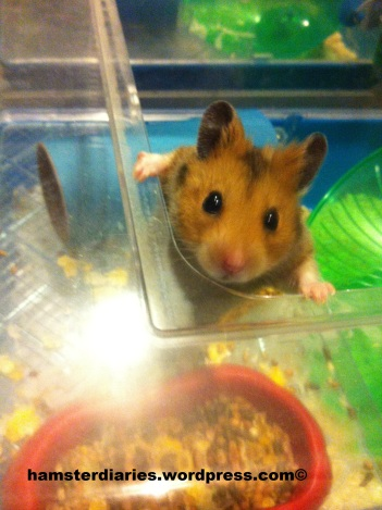 Excited Hamster
