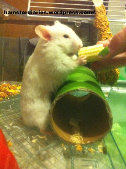 Gimme the sweetcorn!!