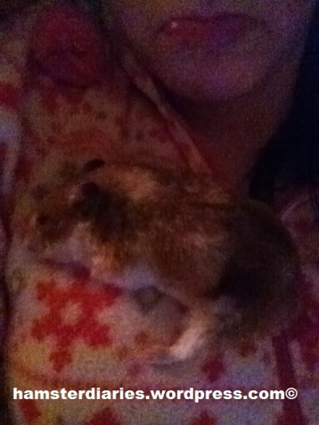 Eve struggling for breath whilst sat on my chest for warmth x