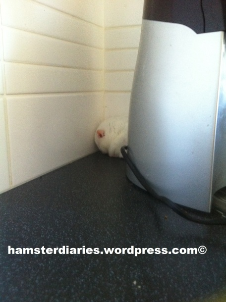 sleeping hamster and smoothie maker