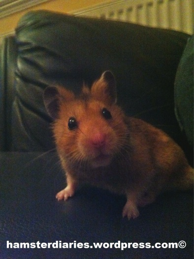 Dexter on the sofa, EVEN MORE CUTEEE!!