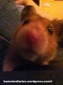 Dexter being the unphotogenic mischief-maker