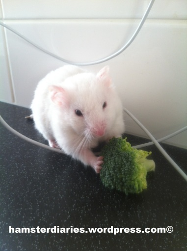 casper eating broccoli