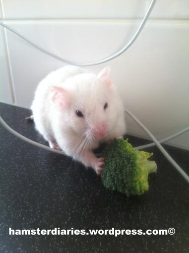 casper eating broccoli