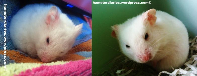 Casper 2012 and 2014