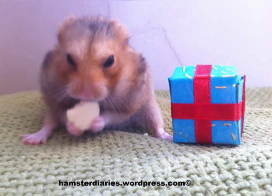 Happy 2nd Birthday Dexter :)