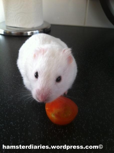 Casper and his little tomato