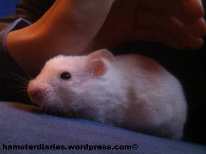 Casper Cuddles!! :)