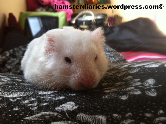 grumpiest hamster in the world!!! :D