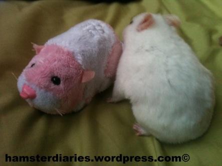 Zhu Zhu Hamster Meets Real Real Hamster ;)