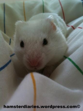 Casper in bed, LOOKING CUTE!!