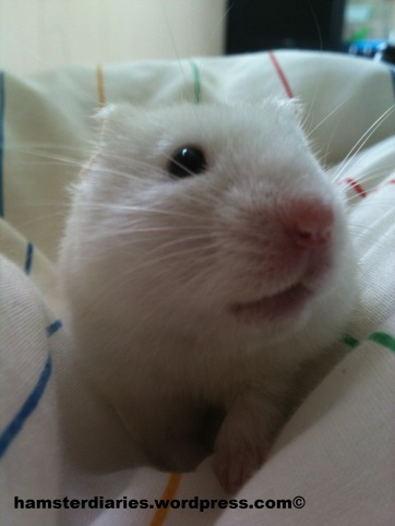 Welcome back to HamsterDiaries!!