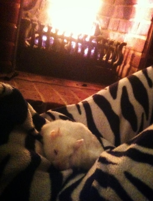 sleepy hamster in front of the fire