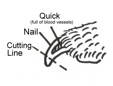 nail-cutting-picture