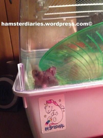 Nosey little Joey!! :D