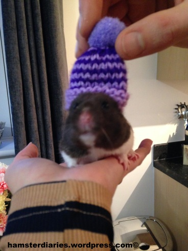 Hamster in a Hat