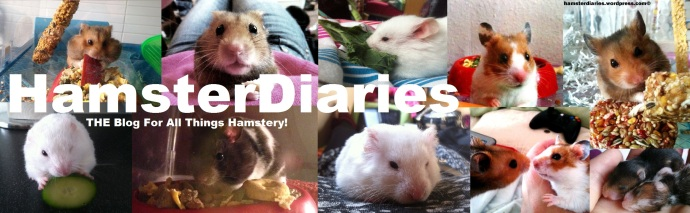HamsterDiaries is on YouTube - are you there?!