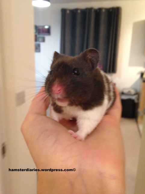 HamsterDiaries milestone!