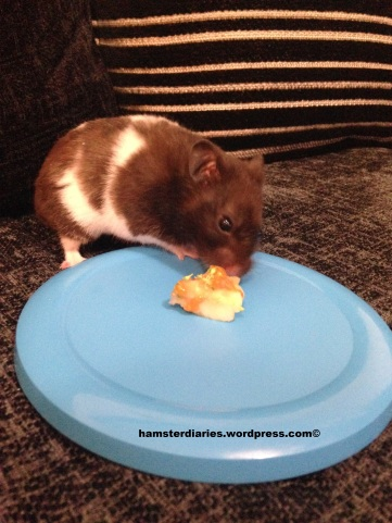 YUMMY YUMMY HOMEMADE HAMSTER TREAT!