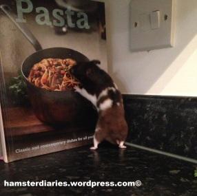 Pasta?! Hamster Pasta?!