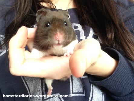 Hamster Selfie