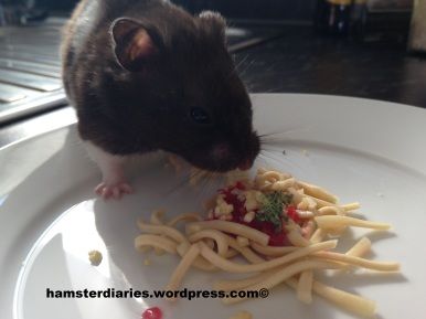 Hamster pasta
