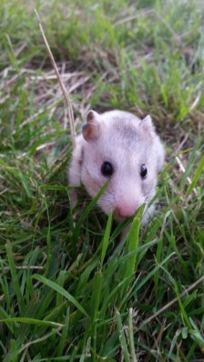 HamsterDiaries | THE Blog For All Things Hamstery