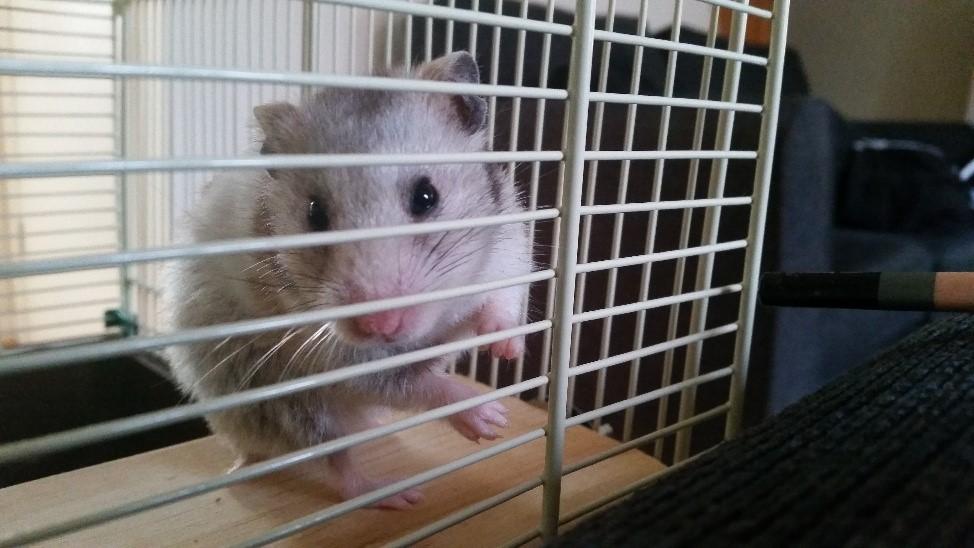 HMRR: FlyStrike – Keeping Your Hamster Safe | HamsterDiaries
