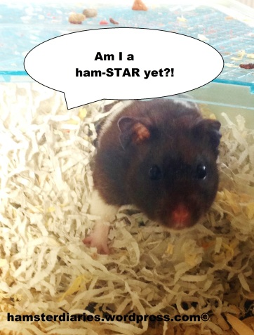 ham-STAR in the making!